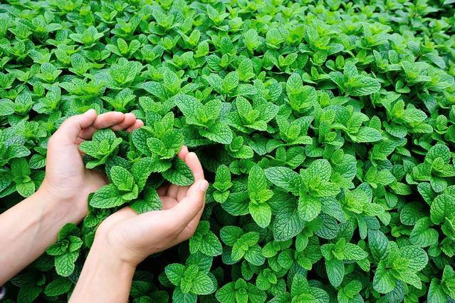 Manos que sostienen plantas